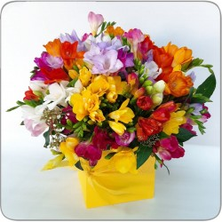 Special Offer 100 freesias in box